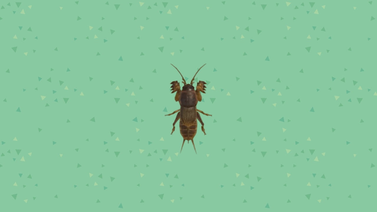 How to find and catch the buzzing insect in Animal Crossing: New Horizons