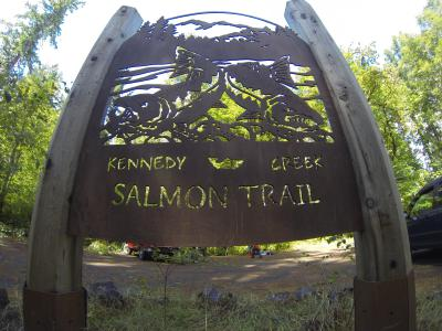 Kennedy Creek - Fallen trees help maintain cool water temperatures, and provides shady and safe shelters for Salmon to spawn.