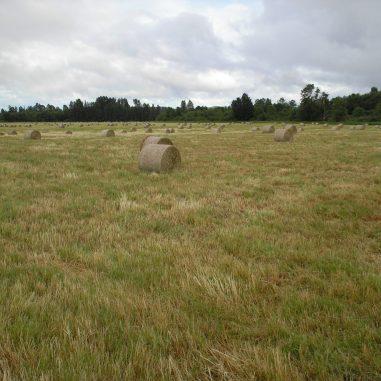 hay bails in pasture
