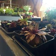 Olympia Farmers Market Succulents