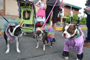 pet parade 12