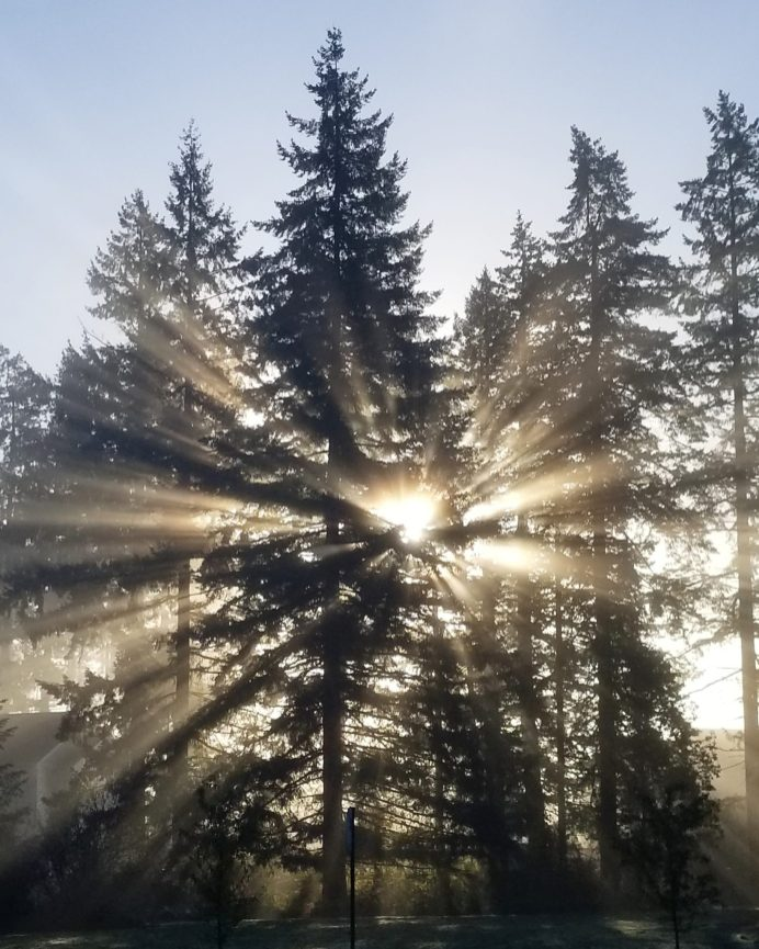 Sunrise in the trees