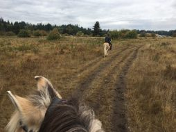 Scatter Creek Horse Trail 27