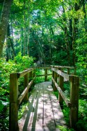 Burfoot Park Thurston County Parks Boardwalk by Molly Walsh