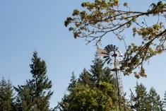 Hope Island Camping Washington State_2