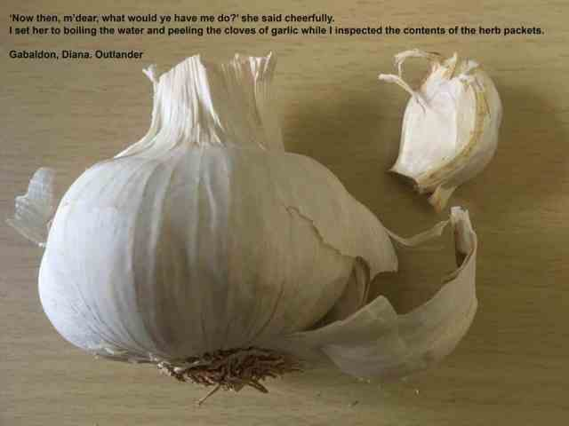 Garlic and the Outlander Medicinal Uses