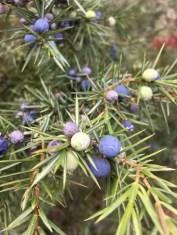 berry berry blues