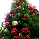 Prevent Your Christmas Tree from Harming the Garden