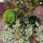 Free Succulents Garden Workshop