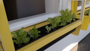 yellow window box