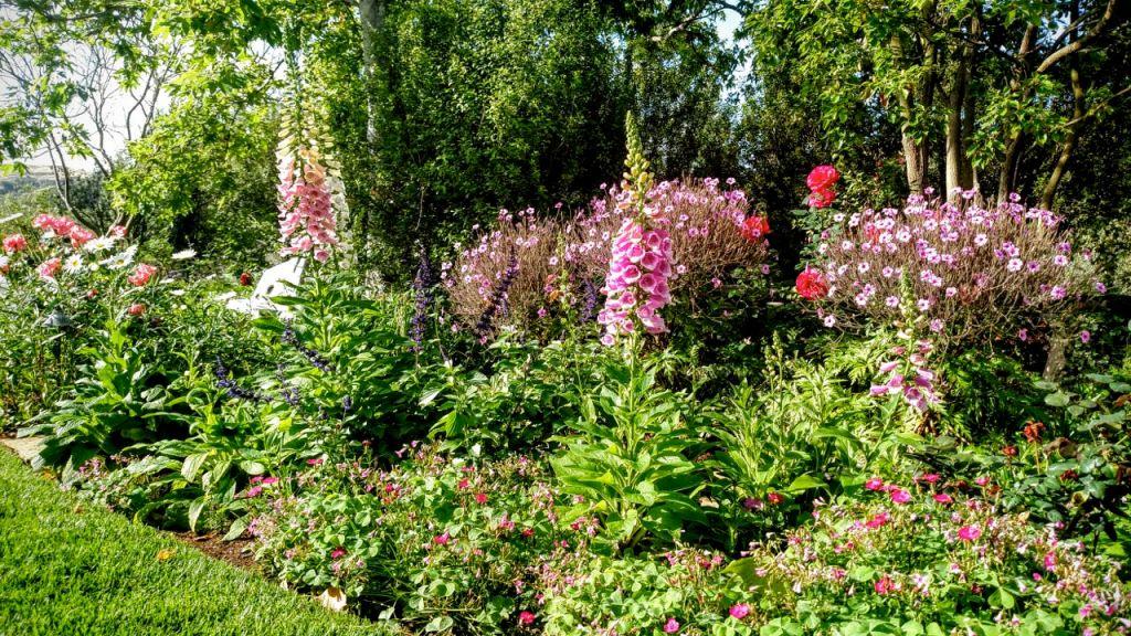 Top 5 garden tips