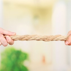 Who's Winning The Battle Of Tug-Of-War In Your House?