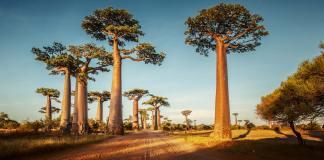 Goedkope vliegtickets Madagascar