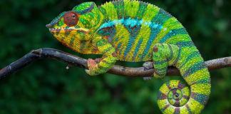 Goedkope vluchten Madagaskar