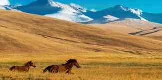 Kazachstan vliegtickets