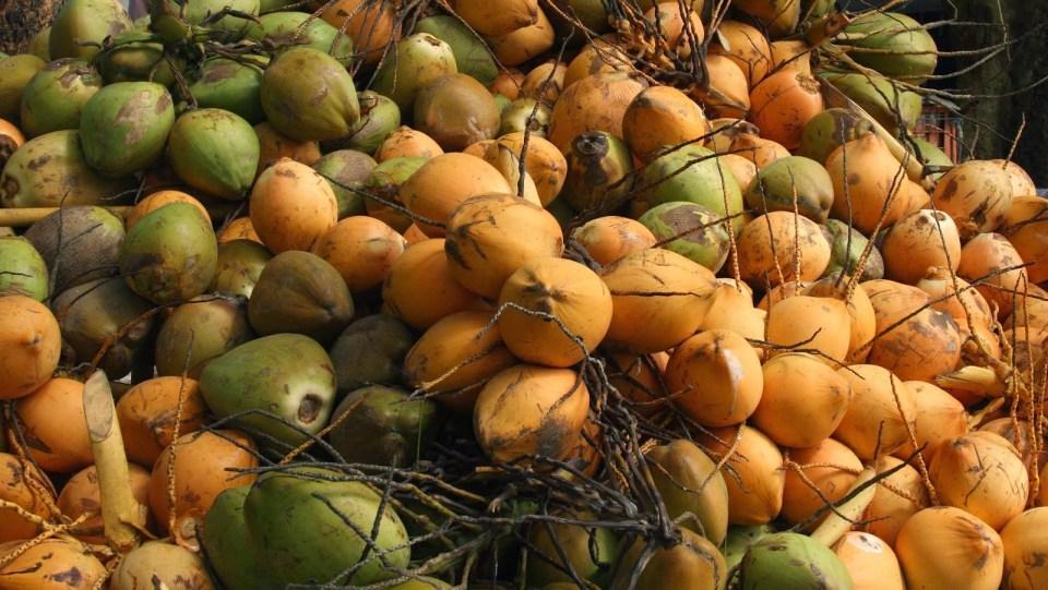 Alleppey: Fancy a coconut?