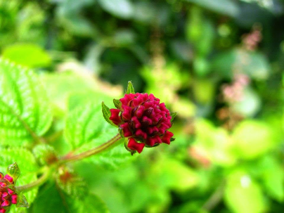 Kas: The little red flowers