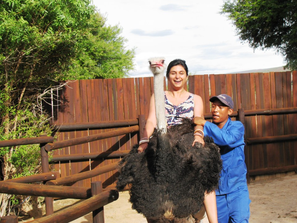 Oudtshoorn: Riding at ostrich in the ostrich farm