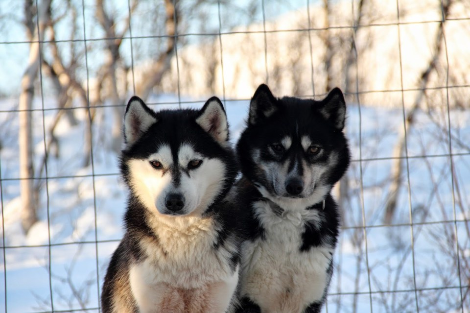 Husky tours for the dog lovers