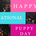 Celebrating National Puppy Day – Adopt  Today!