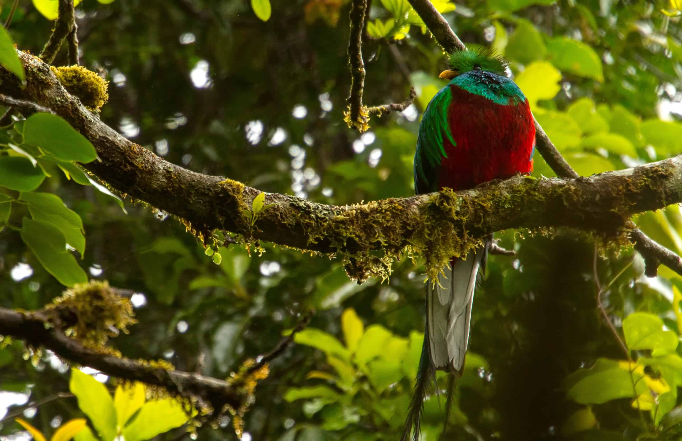 Where The Quetzal Lives The Tico Times Costa Rica News