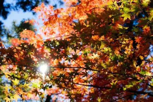 Un voyage de folie : 5 villes, 12 jours, 99€ feuille d'automnetour d'Europe pas cher bon plan beau temps ciel bleu soleil rentrée