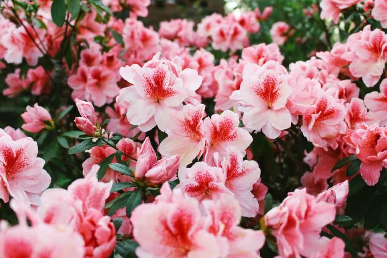 atlanta-march-flowers-2016-20a