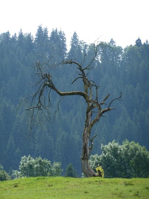 Carl-Hirnbeinweg-toter Baum