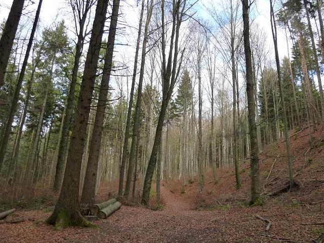 Teufelsküche-Waldweg