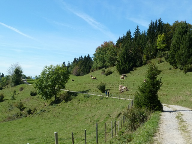 Weg von der Alpe Beichelstein zum Parkplatz Brandstatt
