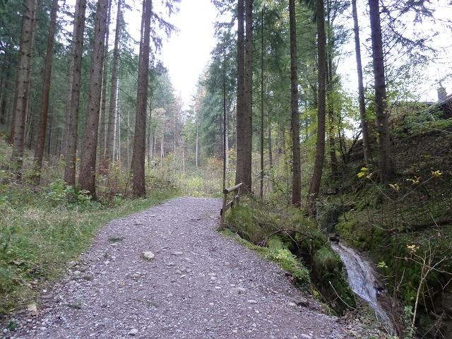 Waldweg an der Alpspitz