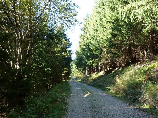 Wanderweg im Adelegg-Wald