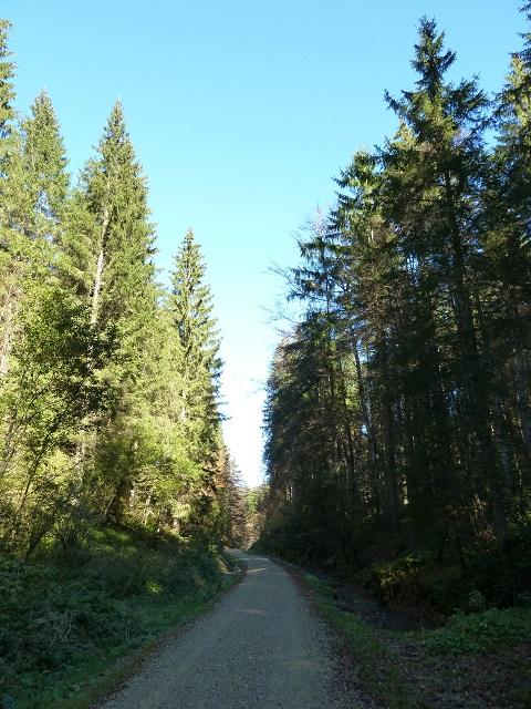 Wanderweg am Bach