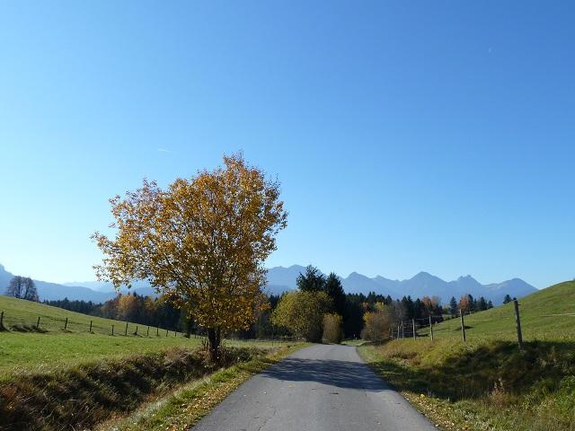 Radweg um den Forggensee