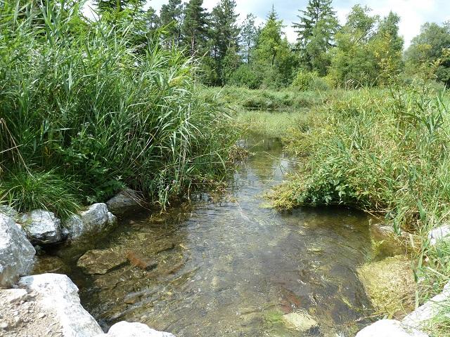 Wasserlauf im Benninger Ried