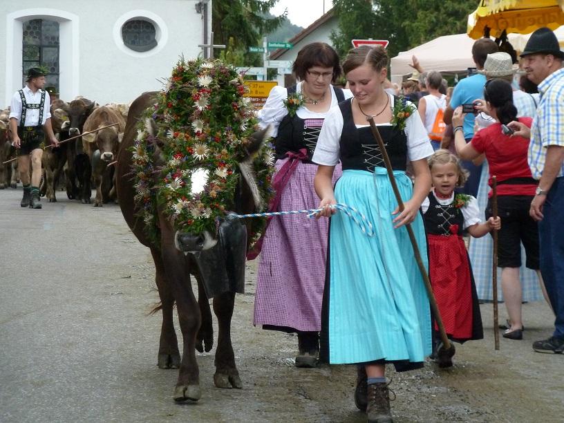 Kranzrind auf dem Viehscheid Kranzegg 2016