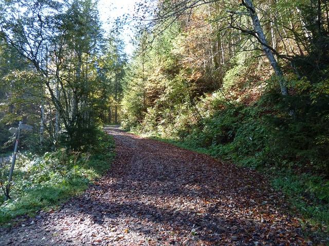Waldweg in der Adelegg im Allgäu