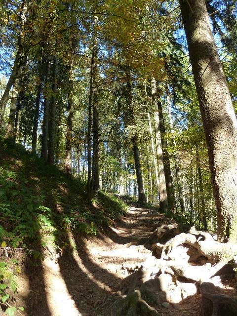 Waldweg zum schwarzen Grat