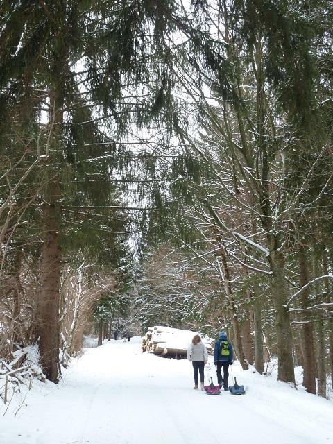 Rodeln am Buchenberg - Aufstieg über die Forststraße