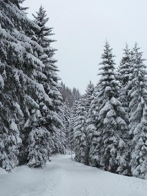 im Winterwald in Jungholz