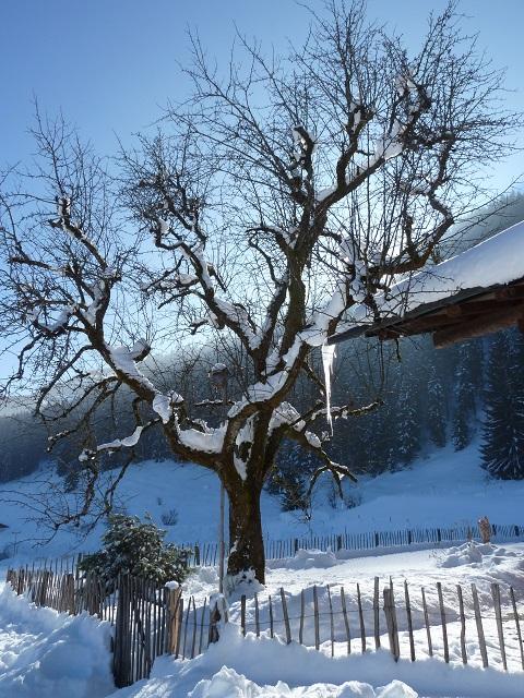 Winteridyll an der Alpe Dornach bei Oberstdorf im Allgäu