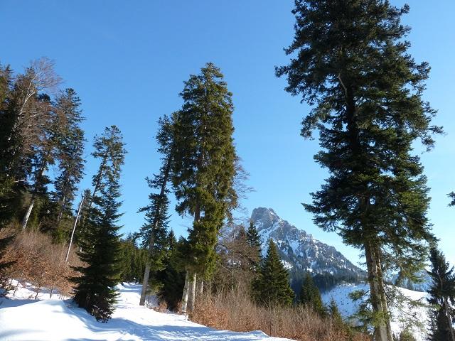 Aufstieg zum Rodeln am Breitenberg mit Blick auf den Aggenstein
