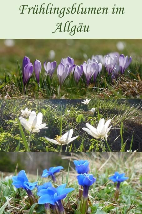 Die schönsten Frühlingsblumen im Allgäu