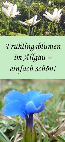 Frühlingsblumen im Allgäu