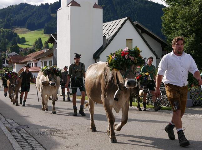 Hirten und Schumpen auf dem Weg zum Scheidplatz in Buching