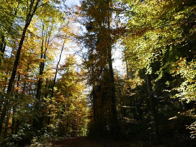 Auf dem Schlosspfad im Herbstwald von Liebenthann