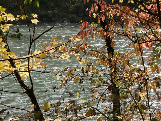 Blick durch buntes Herbstlaub auf die Iller