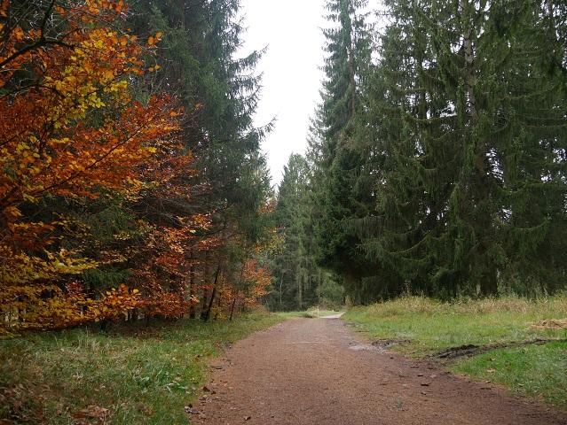 Herbstwald am Elbsee-Rundweg