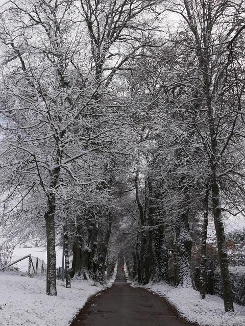 Winterliche Kurfürstenallee