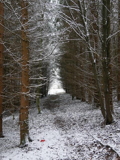 Weg durch einen winterlichen Wald